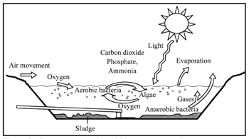 Figure 2 processes occurring within a wastewater lagoon for Design of anaerobic pond