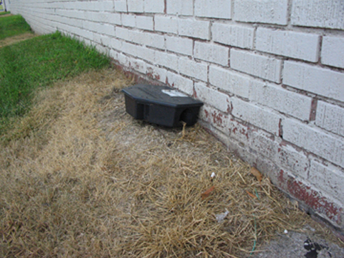 Rat Sized Bait Station Properly Placed Against The Exterior Wall Of A