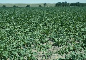 verotonic cu legume varicoase rb